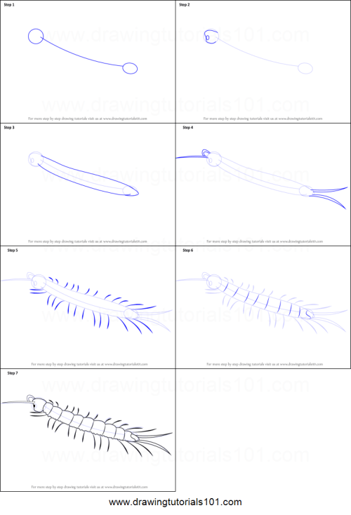 small resolution of step by step drawing tutorial on how to draw a centipede