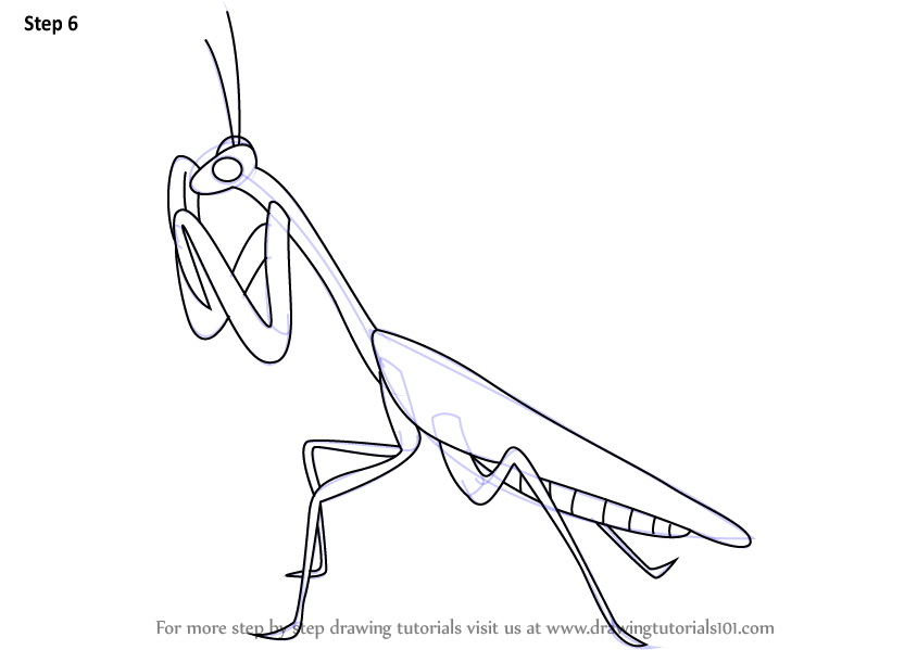 Learn How to Draw a Mantis (Insects) Step by Step