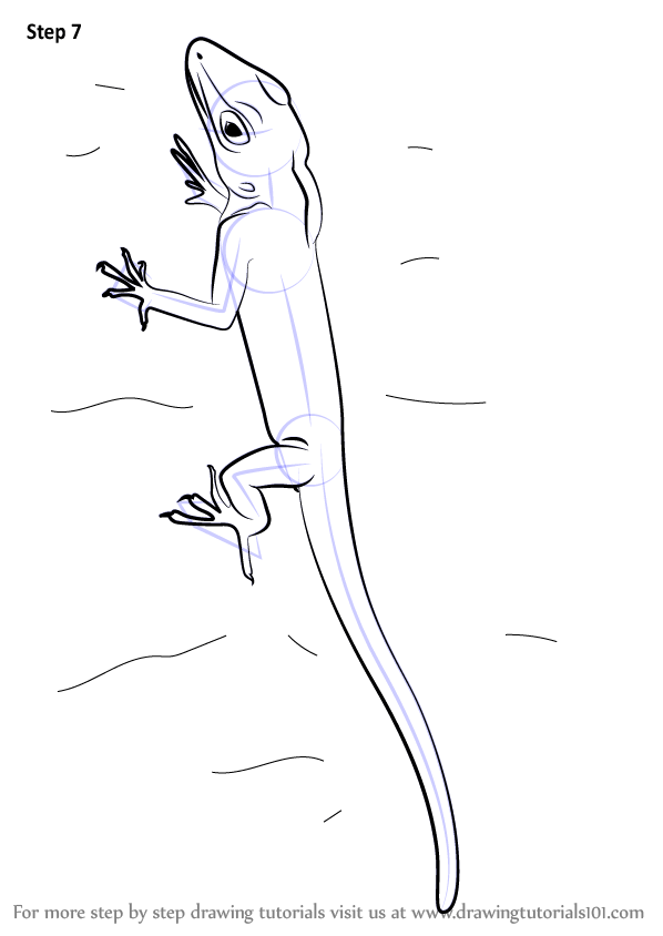 Learn How to Draw an Anolis (Lizards) Step by Step