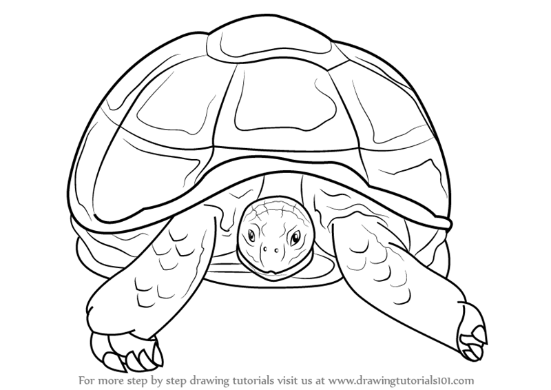 Learn How to Draw an African Spurred Tortoise (Other