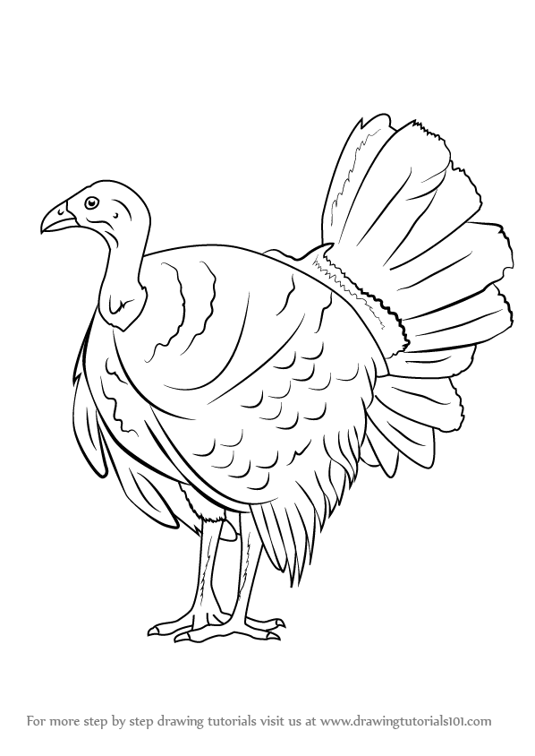 Learn How to Draw an Australian brushturkey (Other Animals