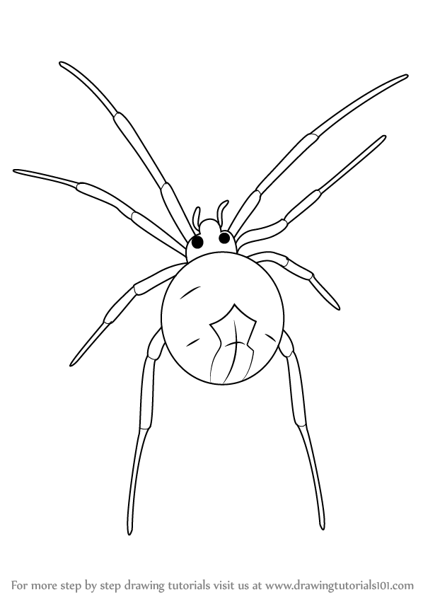Learn How to Draw a Widow Spider (Other Animals) Step by