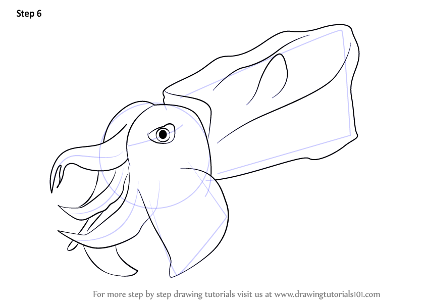 Learn How To Draw A Pfeffers Flamboyant Cuttlefish Other