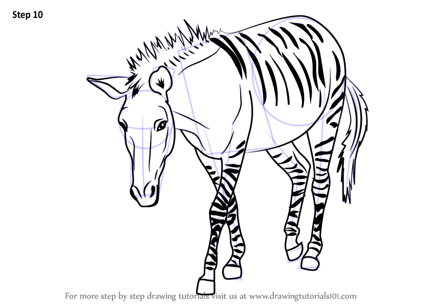 Learn How to Draw a Zonkey (Other Animals) Step by Step