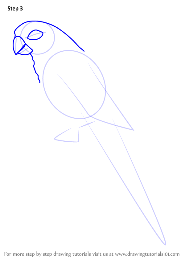 Learn How To Draw A Green Cheeked Parakeet Parrots Step