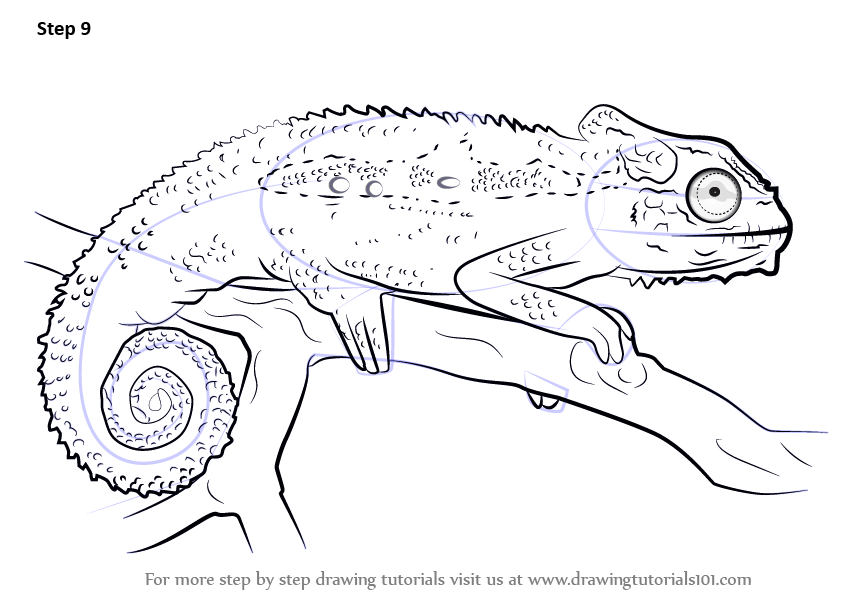 Learn How to Draw a Cape dwarf chameleon (Reptiles) Step