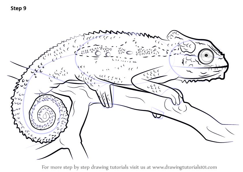 draw the diagram of crocodile