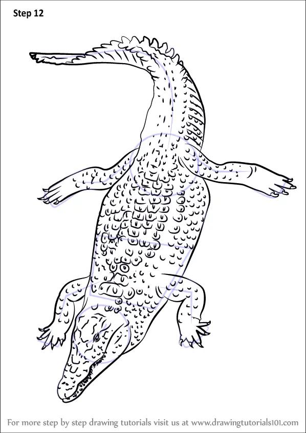 Step by Step How to Draw a Nile Crocodile
