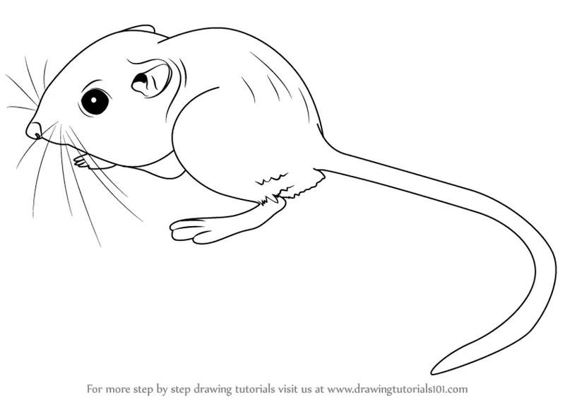 Rats Drawing