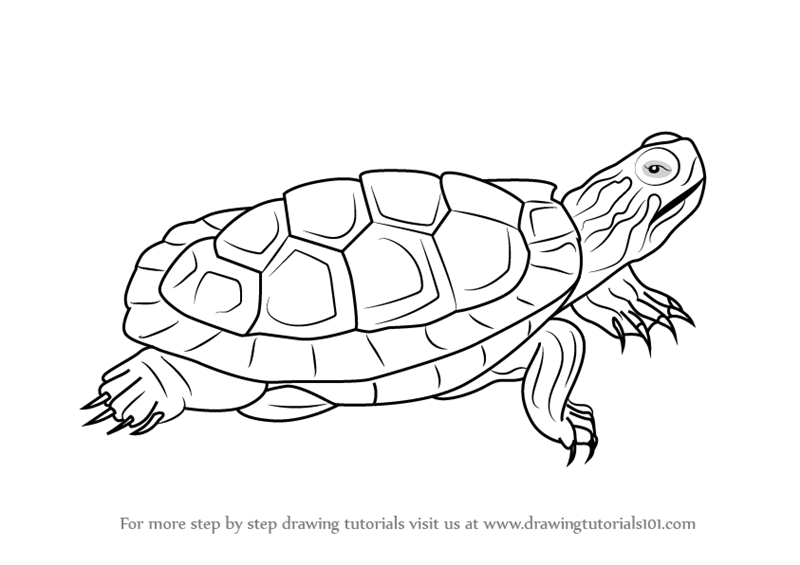How To Draw A Tortoise Printable Step By Step Drawing