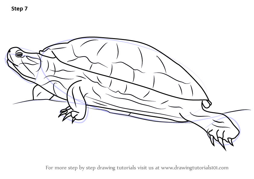 Learn How to Draw a Red-Eared Slider (Turtles and