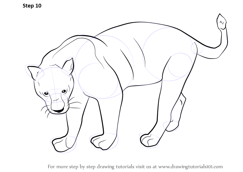 Learn How to Draw a Black Panther (Wild Animals) Step by