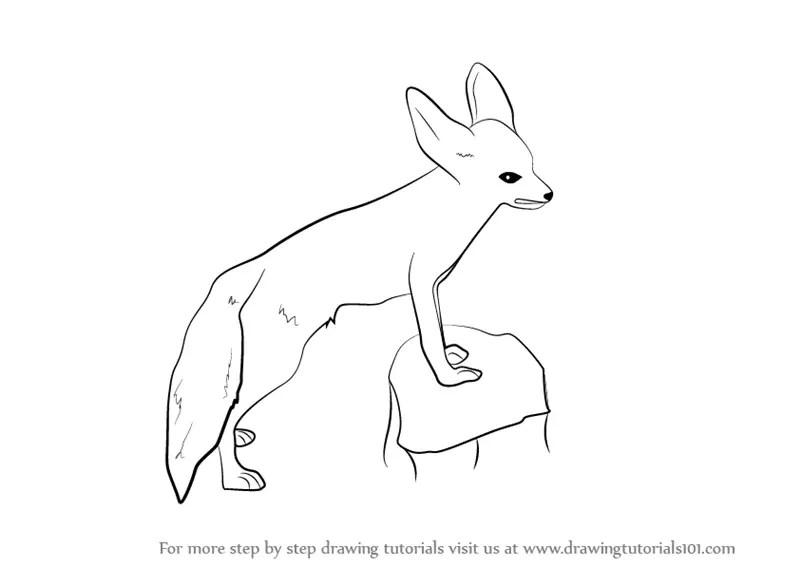 Realistic Easy Fennec Fox Drawing