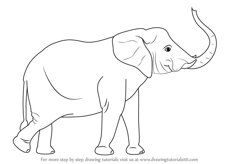 Step by Step How to Draw an Elephant with its Trunk Up