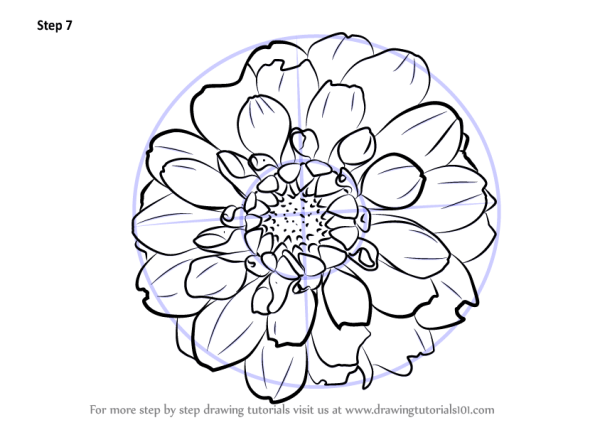 Learn How to Draw Dahlia Flower Other Flowers Step by