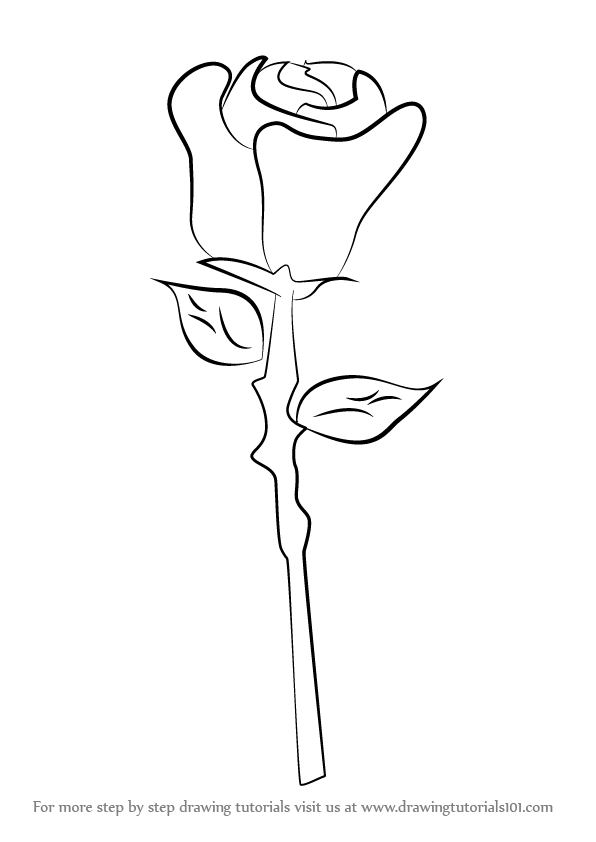 Learn How To Draw A Rose Easy Rose Step By Step Drawing Tutorials