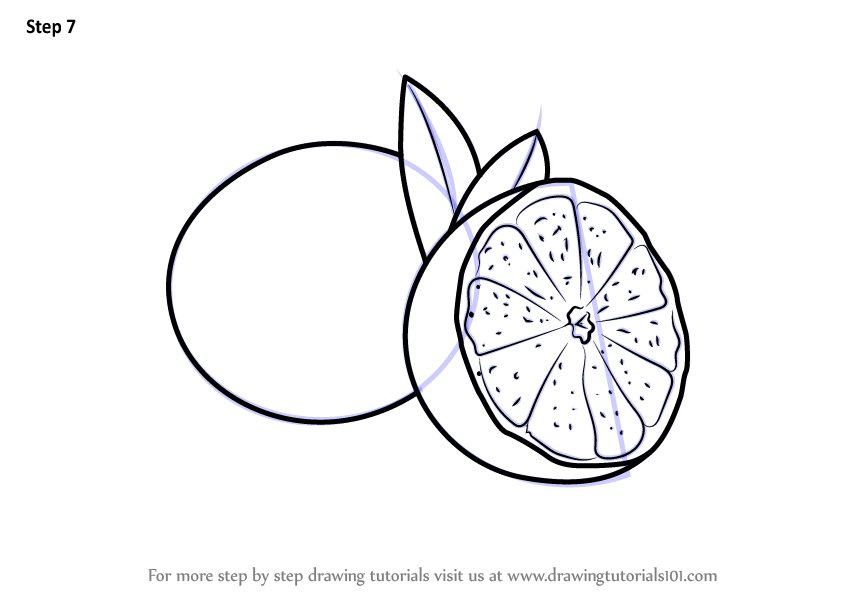 Learn How to Draw a Sliced Lime Fruits Step by Step