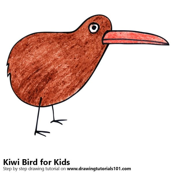 20 Drawing Kiwi Bird Pictures And Ideas On Meta Networks