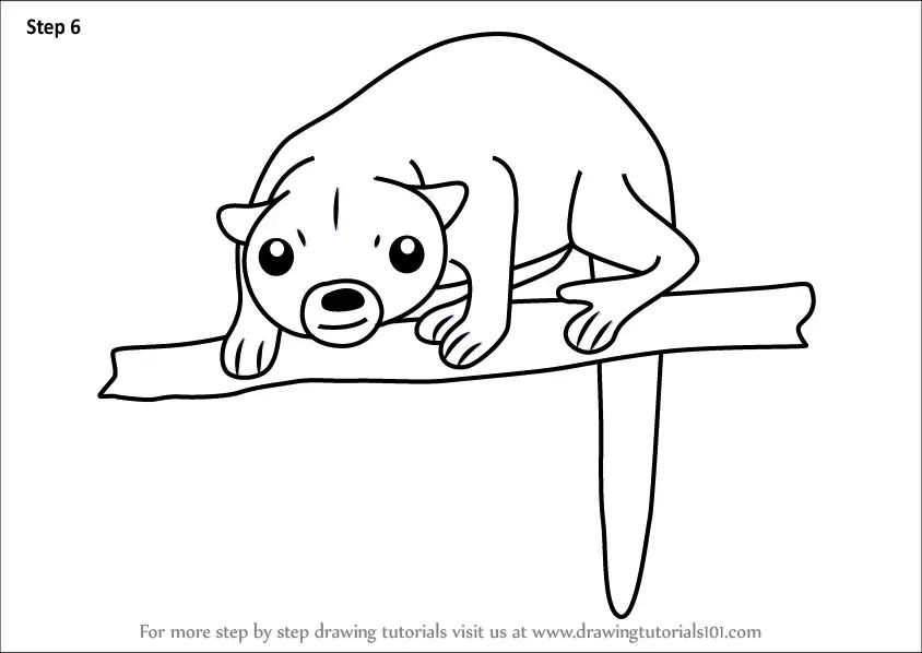 Learn How to Draw a Cartoon Kinkajou (Cartoon Animals