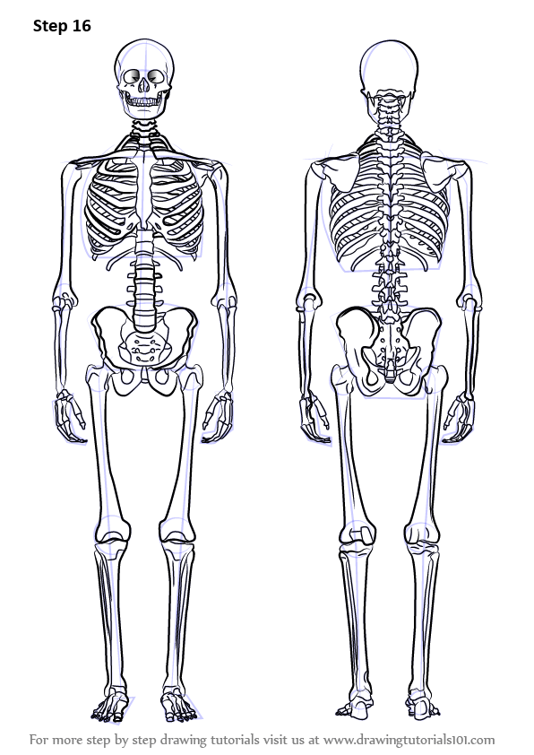 Learn How to Draw a Skeleton (Everyday Objects) Step by