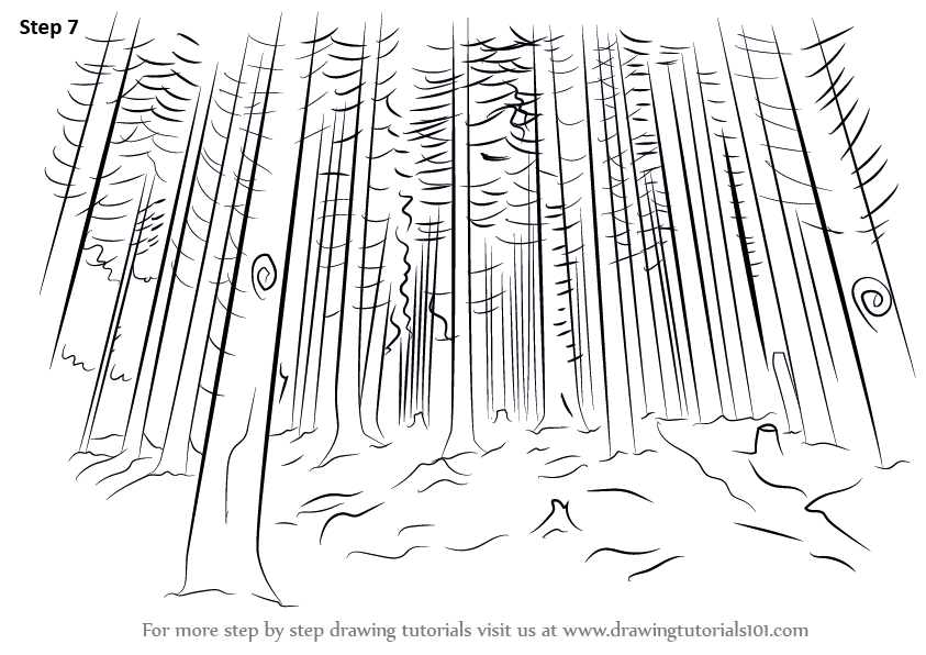 Learn How to Draw a Forest (Nature) Step by Step : Drawing