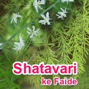 Shatavari Benefits in hindi, Churna or Powder ka Faide