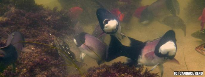 Diver's Cove