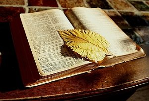 Bible with Dead Leaf