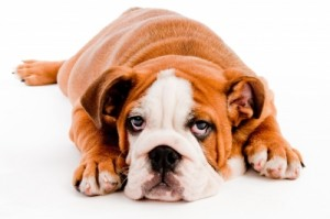 Did Fido leave pet stains in your carpet?