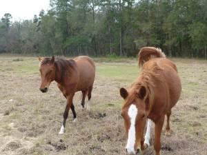r-o-ranch-equestrian-park-12