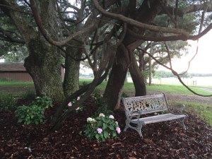 Wedding Venue in Gilchrist County: Seven Hills Farm, Southeast Co Road 337, Trenton, FL