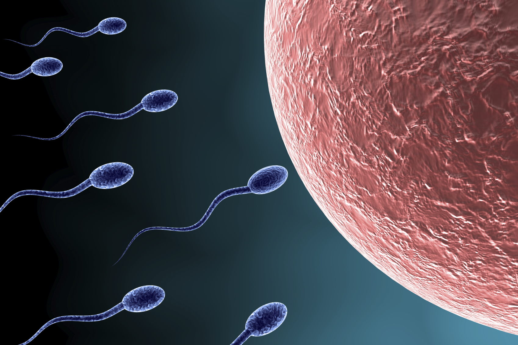 Infertility counseling for IVF, donor eggs, donor sperm, donor embryos, surrogacy.