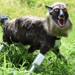 super monster wolf2 1 - Japanese Farmers Are Using Terrifying Robot Wolves to Guard Their Crops