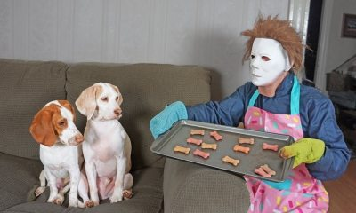 Michael Myers and Dogs - Michael Myers Actually Loves Dogs in Hysterical Parody Video