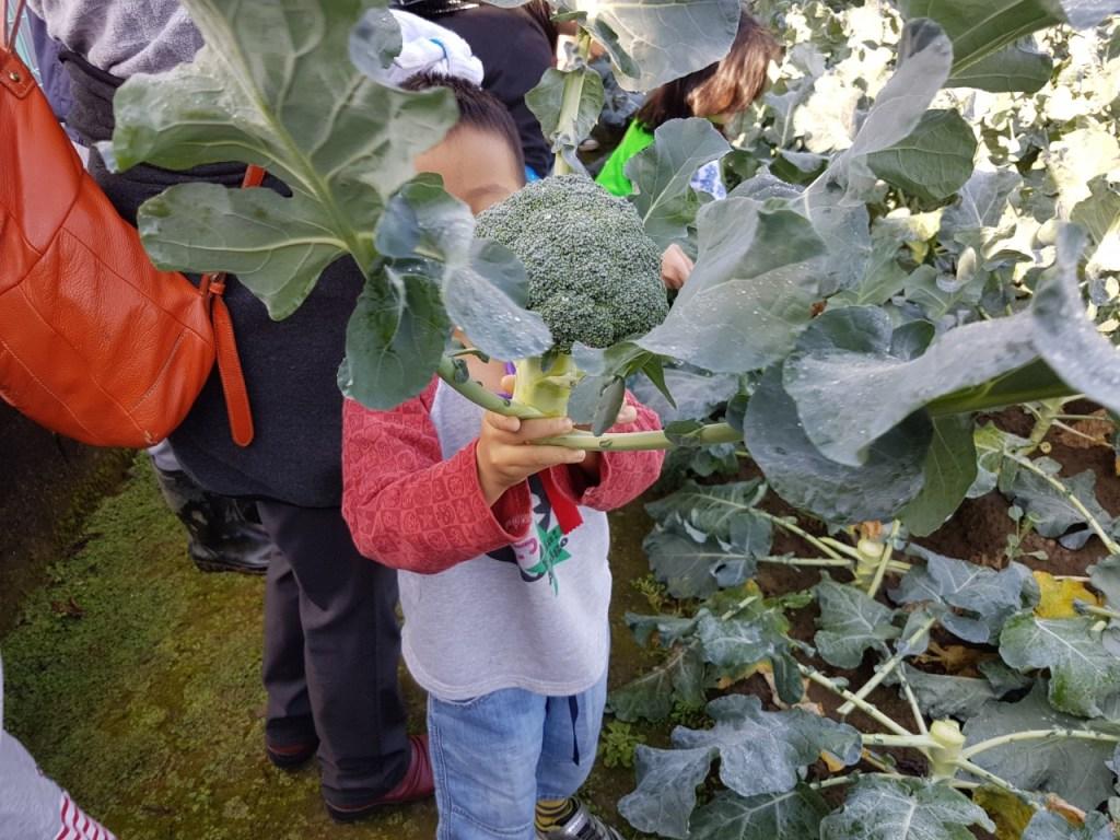 野菜収穫オリエンテーション