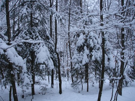 Winter2010 052