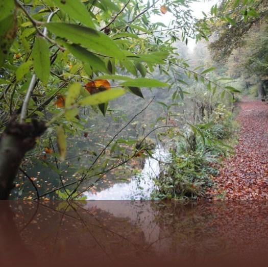 Herbst2010 005