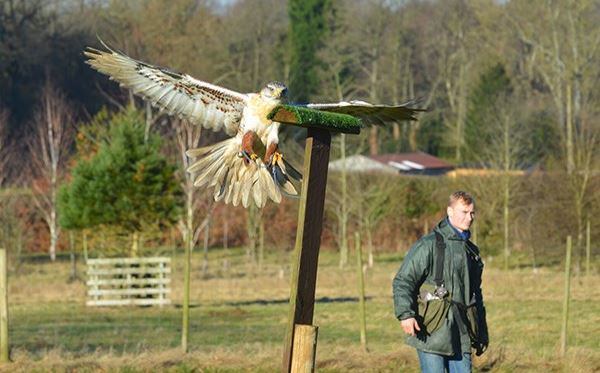 Keeper For A Day For Two At Willows Bird Of Prey Centre