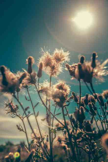blossoms in the sun