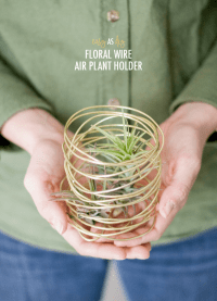 Easy as D-I-Y: Floral Wire Air Plant Holder  Dream Green DIY