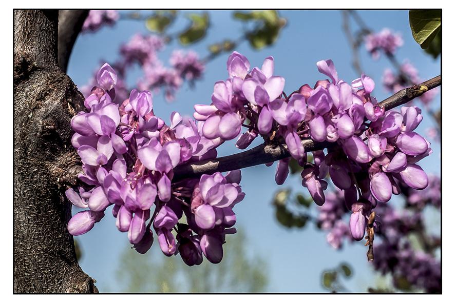Primavera foto di Morgan Capasso