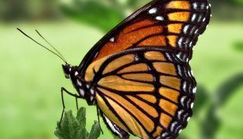 Dream Meaning of Flies - Dream Interpretation