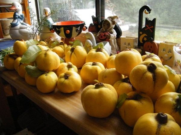 Sorting quinces