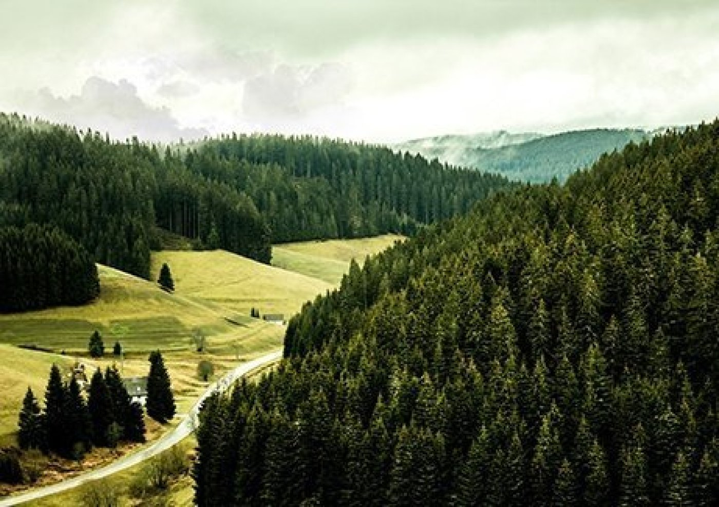 black forest traveling through germany