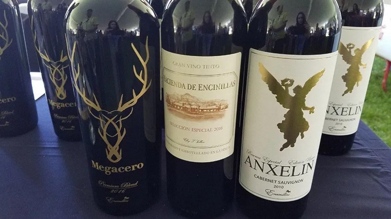 mexico wine