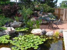 Fish  KOI Pond ContractorCentral PALebanonHarrisburgMechanicsburg  DreamscapesWatergardenscom