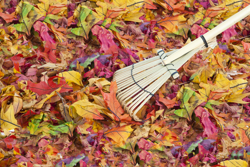 Image results for sweeping leaves