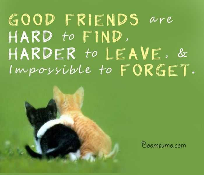 Quotes About Good Friendship Custom Short Friendship Quotes Archives  Dreamsquote