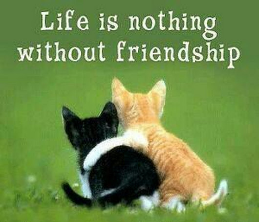 Best Friends Quotes Life Is Nothing Without Friendship Dreams Quote