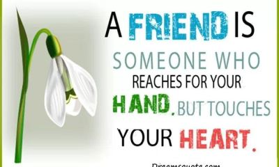 Cute Friendship Quotes And Friendship Sayings Finding A Loyal Friend